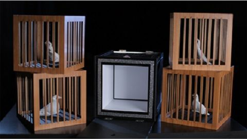 EVERYTHING-TO-4-DOVE-CAGES-2