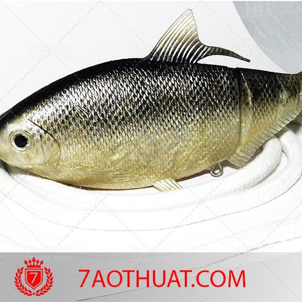 ca-gia-nhua-3