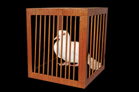 Appearing-dove-cage-from-every-place (1)