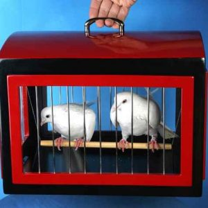 Transformation-of-Dove-Cage-into-Rabbit-Cage-1