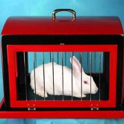 Transformation-of-Dove-Cage-into-Rabbit-Cage-3