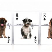 Companion-Dog-Playing-Card (5)