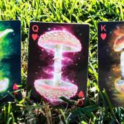 Limited-Edition-Fungi-Mystic-Mushrooms-Mycological-Playing-Cards (2)