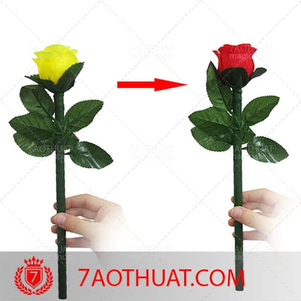 Hoa-hong-doi-mau-4-lan (4)